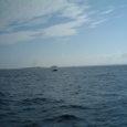 おおっ!!クジラが見えたぞー!!